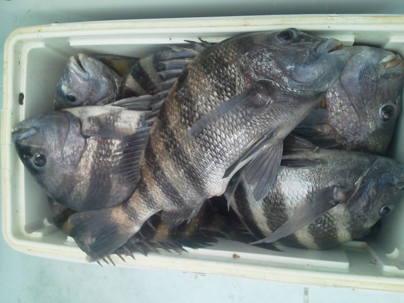 April 14th fishing report cooler full of fish on a 6hr for Are fish biting today